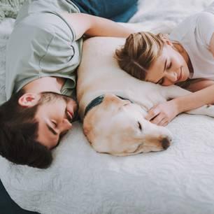 Was verrät die Kuschelposition über die Beziehung? Ein Pärchen mit einem Hund im Bett