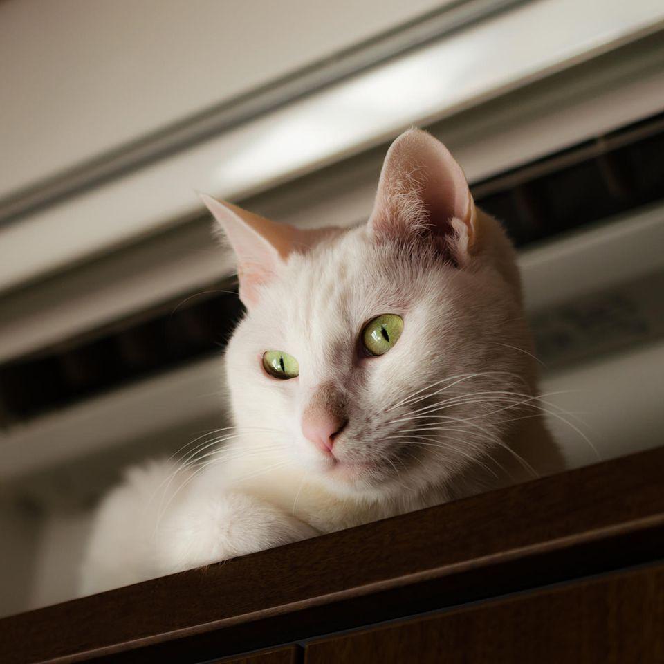 Klimaanlagen können Katzen und anderen Haustieren schaden.