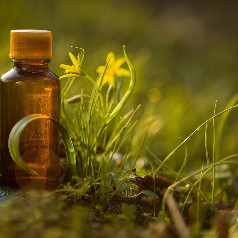Wirkung von Bachblüten: Bachblütentropfen in Natur