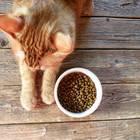 Katze frisst nicht: Katze liegt neben Futter
