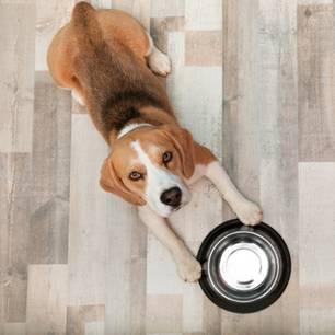 Heimliche Videoaufnahmen zeigen: Darum ist das Hundefutter immer leer