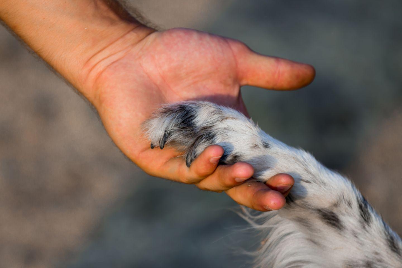 Der schlaueste Hund der Welt ist tot 🌈 Was Chaser alles konnte …