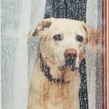 Trennungsfehler, die unnötig wehtun: Ein trauriger Labrador an einer verregneten Scheibe
