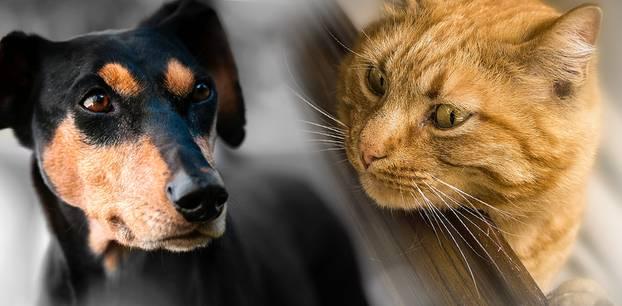 Hund vs. Katze: Welches Haustier ist schlauer? Diese Studie gibt nun eine Antwort!