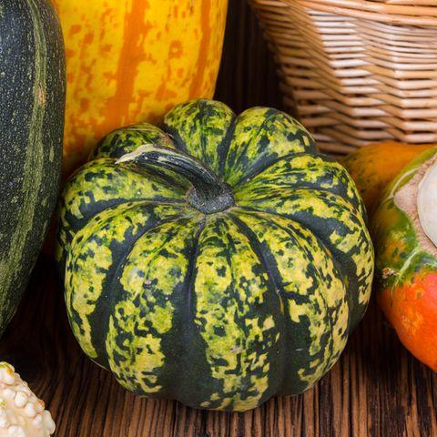 Gorgonzola-Kürbis grün-gelb gefleckt