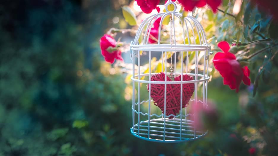 Rührender Liebesbeweis: Dieser Mann pflanzt seiner blinden Frau einen wunderschönen Garten