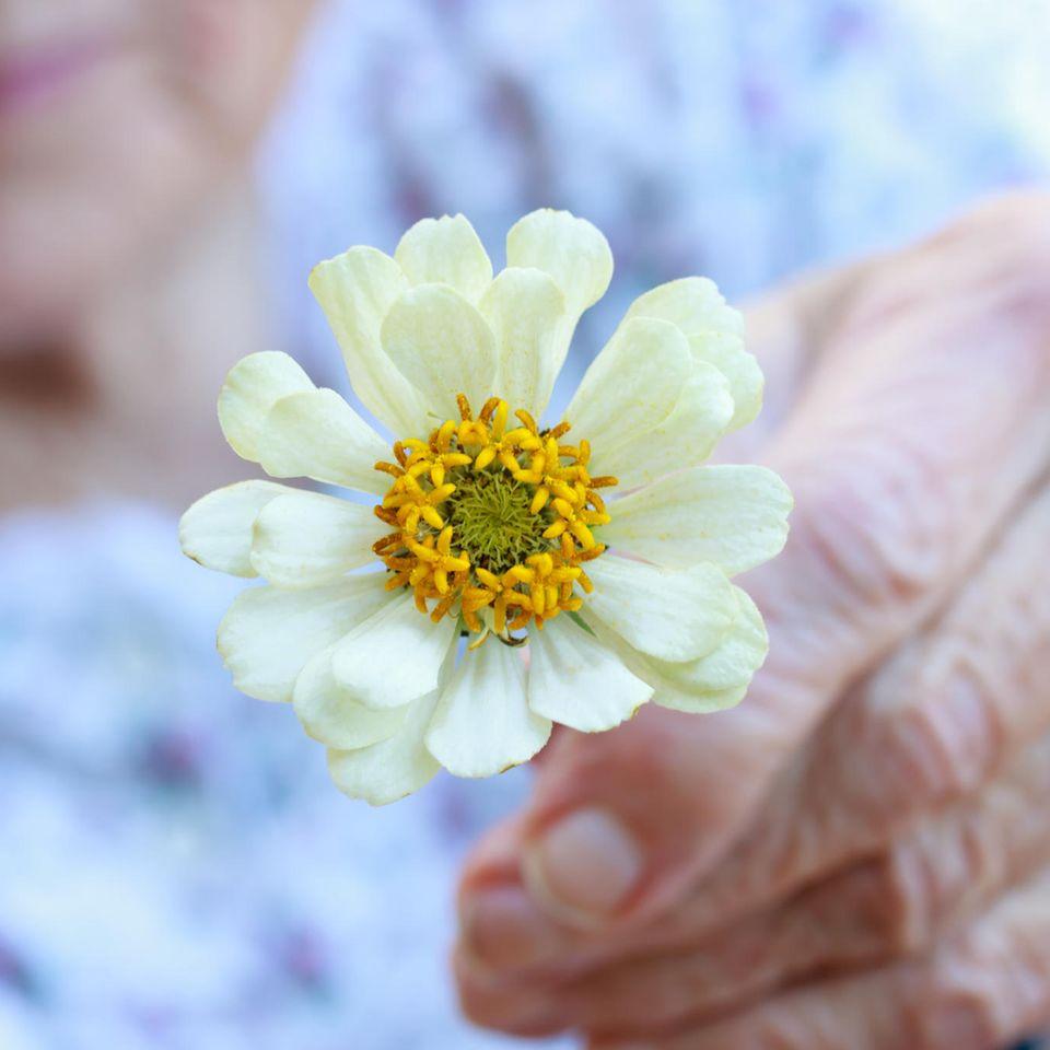 Liebeslektionen von 100-Jährigen: Eine alte Frau hält eine Blume