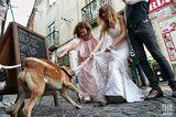Hochzeitsfoto: Hund zerrt am Hochzeitskleid