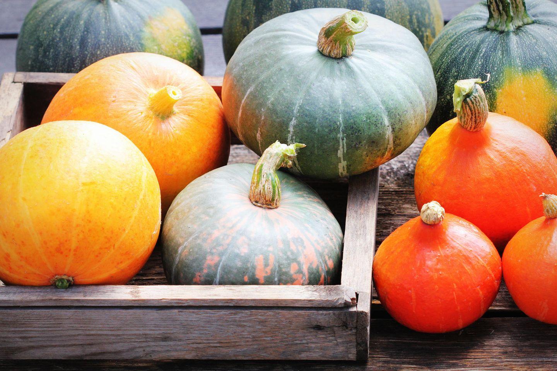 Kürbis Obst oder Gemüse: Kürbisse in einer Kiste