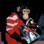 Michael Jackson: Das ist aus dem Schimpansen des Sängers geworden