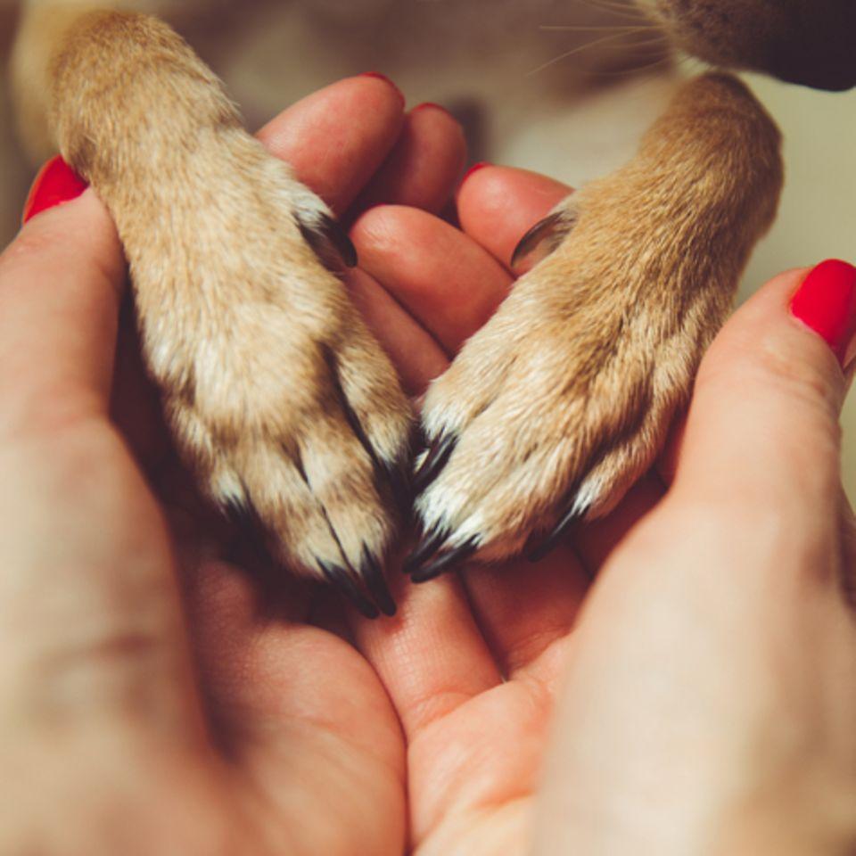 Hund hat Pfoten in Hand von Frauchen