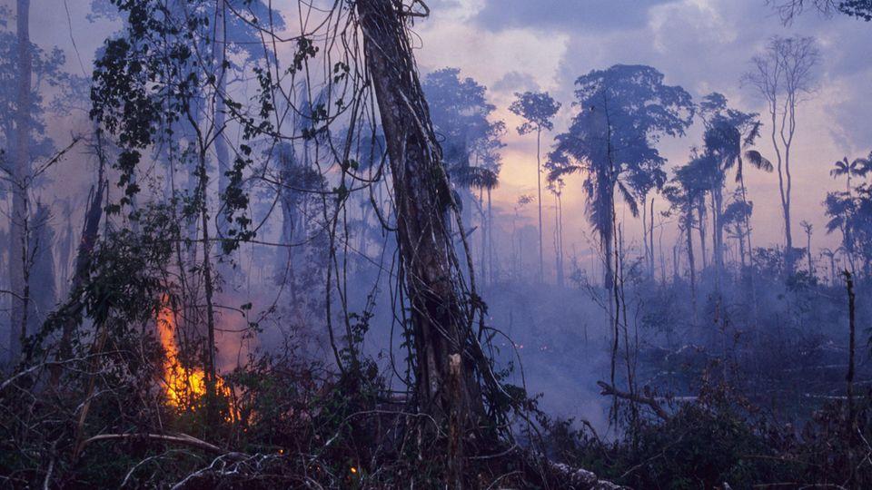 Der Regenwald in Brasilien brennt – was können wir dagegen tun?