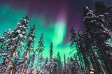 Polarlichter: Bäume mit Schnee bedeckt, im Himmel grüne Polarlichter