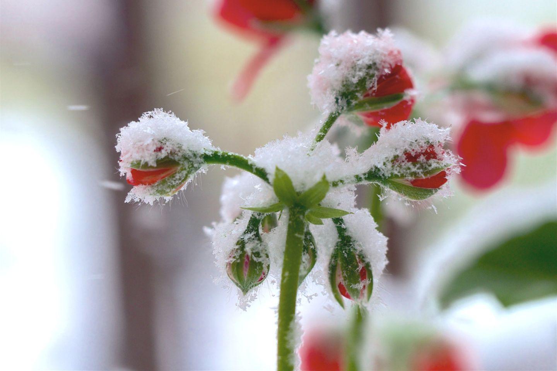 Wie bitte?! Nächste Woche erster Schnee möglich!