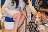 Schuhe der Royals: Meghan Marle mit Hund