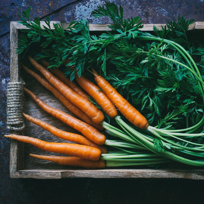 Möhren winter lagerung Karotten lagern
