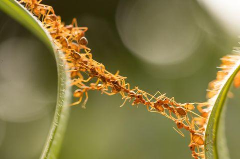 Was hilft gegen Ameisen: Ameisenformation