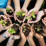 Brigitte.de macht grün: Hände mit Erde und Pflanzen