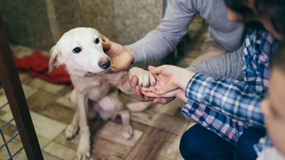 Tieradoption: So bereitest du dich auf dein neues Familienmitglied am besten vor