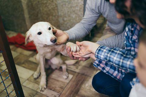 Interview Adoption