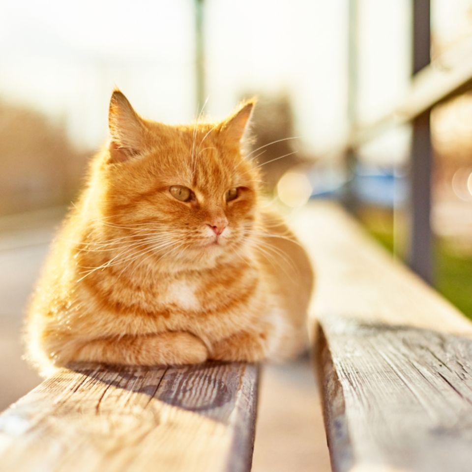 Campus Cat: Katze liegt auf einer Bank