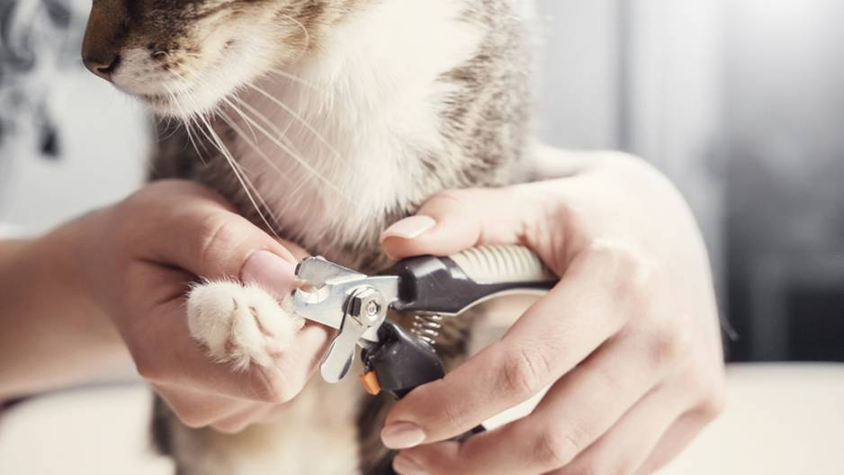 Katze werden die Krallen geschnitten