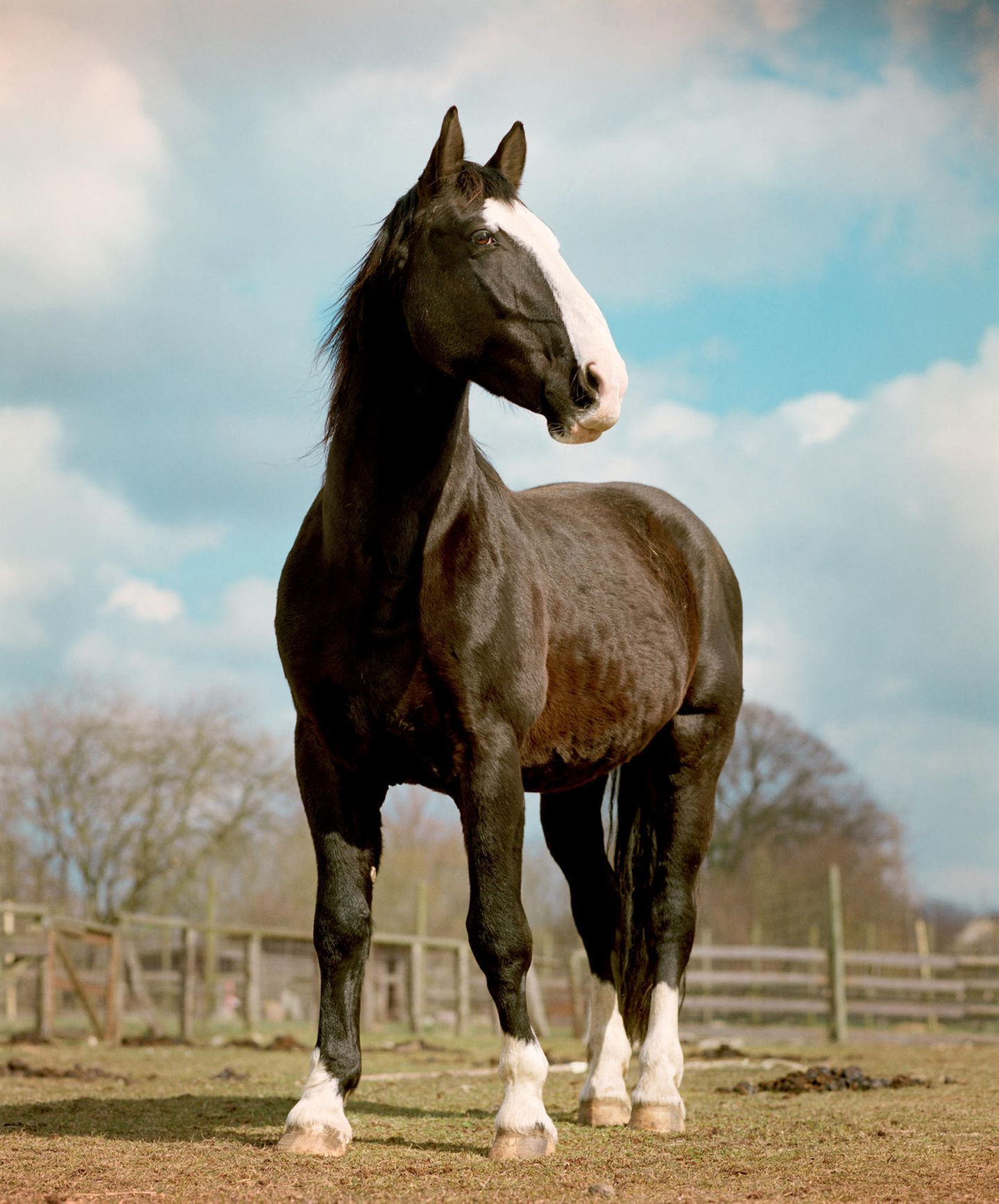 Tiere, die bald aussterben: Pferd