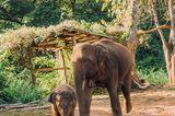 Chiang Mai - die besten Insidertipps: Elefanten