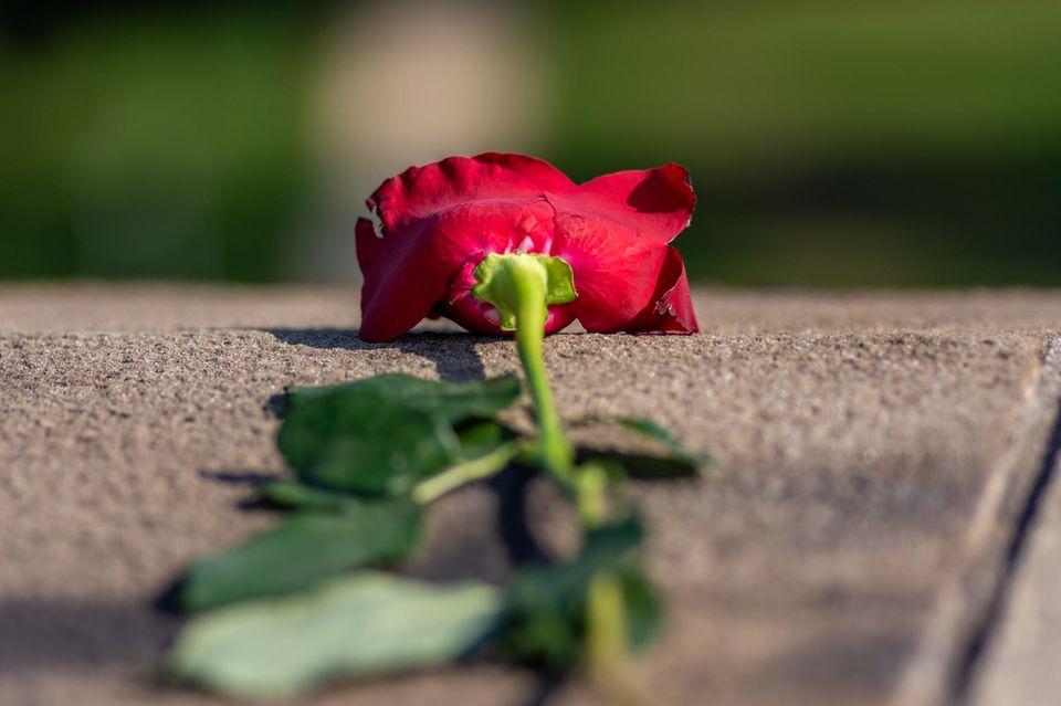 Trennung ohne Vorwarnung - Was geht in Männern vor?: Rote Rose