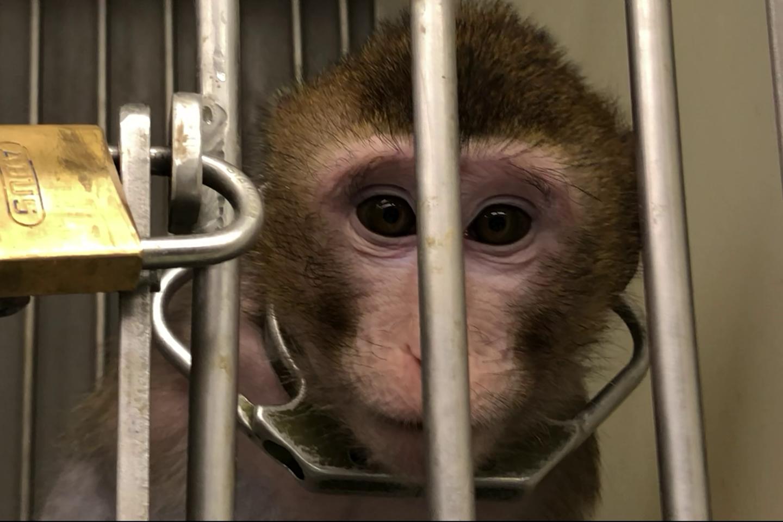 Soko Tierschutz und Cruelty Free International deckten Tierversuchsskandal auf