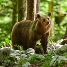 So helfen Bären im Kampf für mehr Body-Positivity