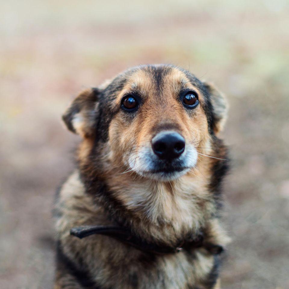 Bewiesen: So sehr schadest du deinem Hund, wenn du ihn anbrüllst