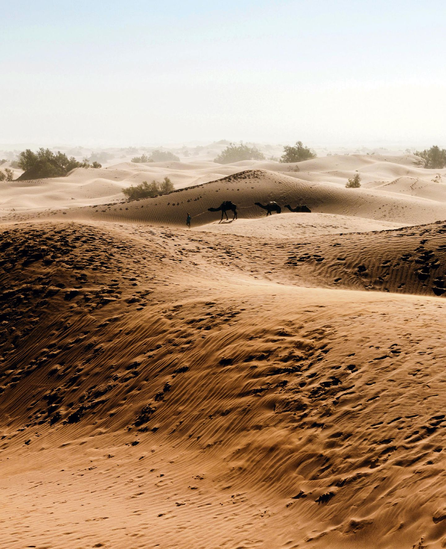 Marokkos Süden - die besten Reisetipps: Wüste