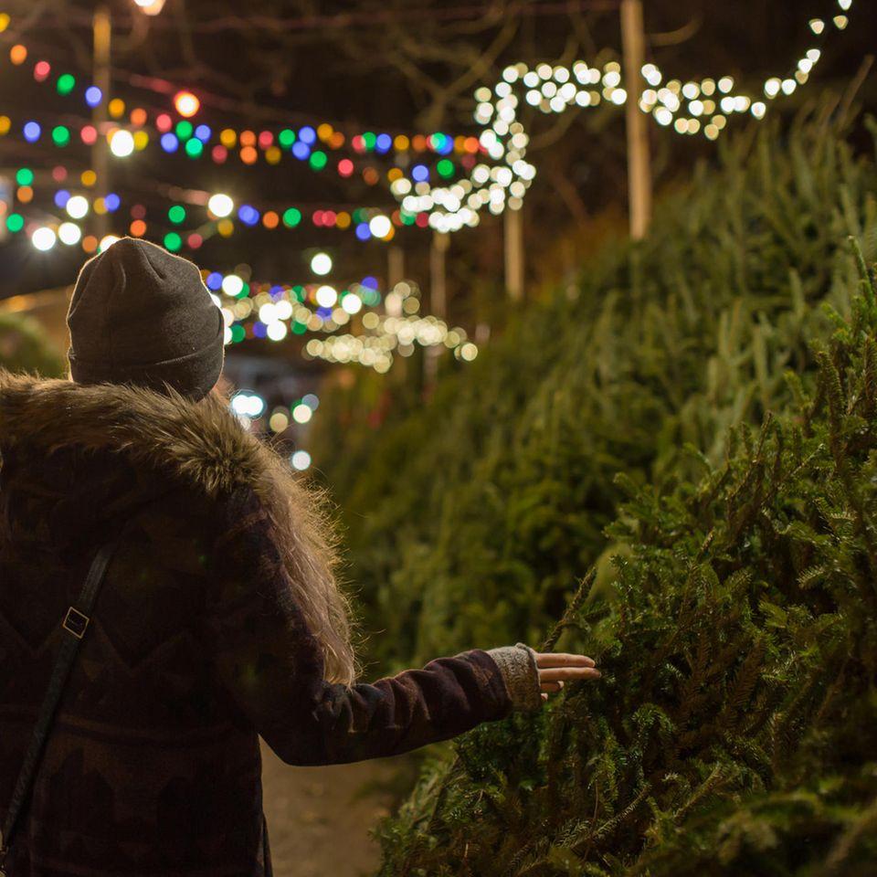 Mit dem Weihnachtsbaum holst du dir tausende Insekten ins Haus