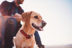 Mann stirbt nach Hundekuss: Hund mit Herrchen