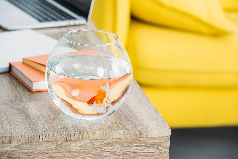 Goldfisch allein im Glas