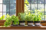 Wohntrends 2020: Indoor Gardening