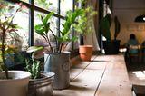 Wohntrends 2020: Pflanzen
