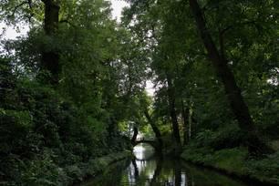 Baumkronen im Naturschutzgebiet Dessau-Wörlitz