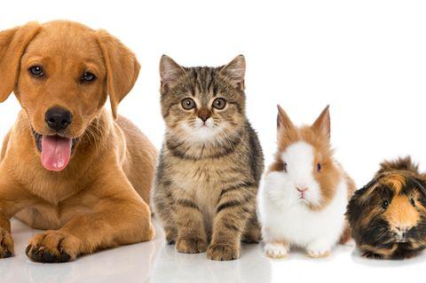 Hund, Katze, Kaninchen und Meerschweinchen