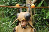 Dschungelcamp: Sarah Knappik im Kakerlakenkostüm