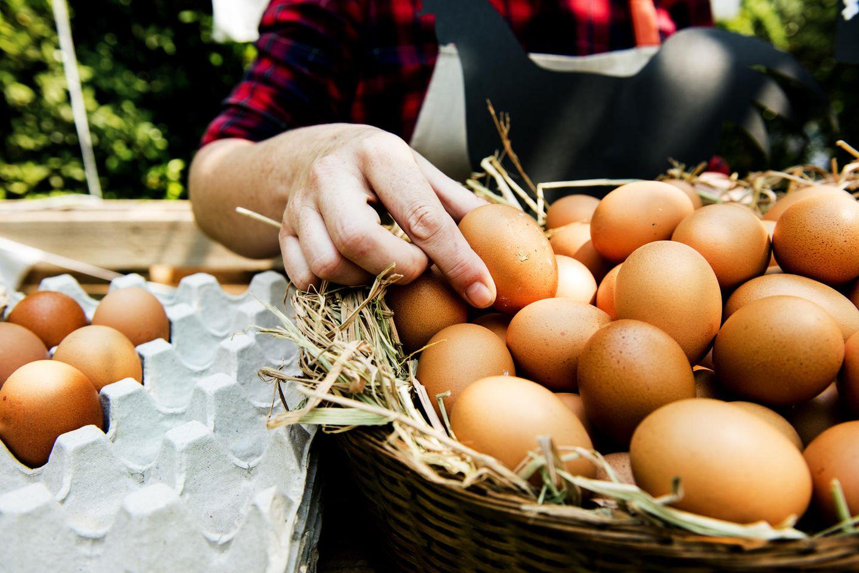 Eier von glücklichen Hühnern - woran erkenne ich sie?: Korb mit Eiern