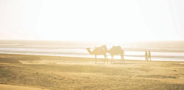Marrakesch-Tipps: Kamele am Strand von Essaouira