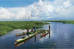 Reisetipps Borneo: Wie aus einer anderen Zeit: Fluss und Sumpflandschaft