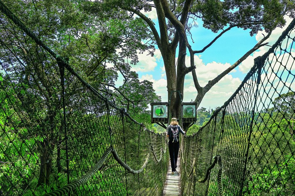 Reisetipps Borneo: Wie aus einer anderen Zeit: Hängebrücke