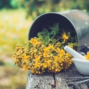 Heilpflanzen und ihre Wirkung auf die Chemotherapie