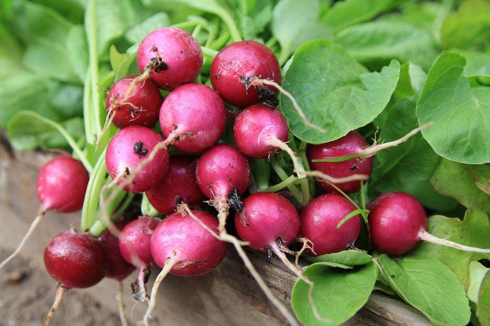 Power-Gemüse: Radieschen