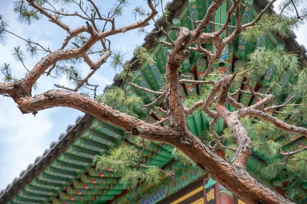 Achtsam kochen: Die wichtigste Zutat ist Geduld: Baum Südkorea