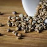 Hanfsamen: Samen in der Schüssel