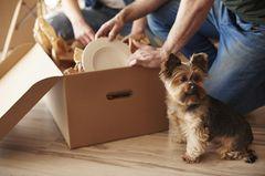 Hund neben Umzugskarton